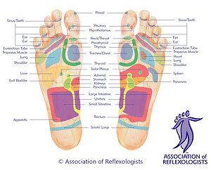 Association of Reflexologists Diagram